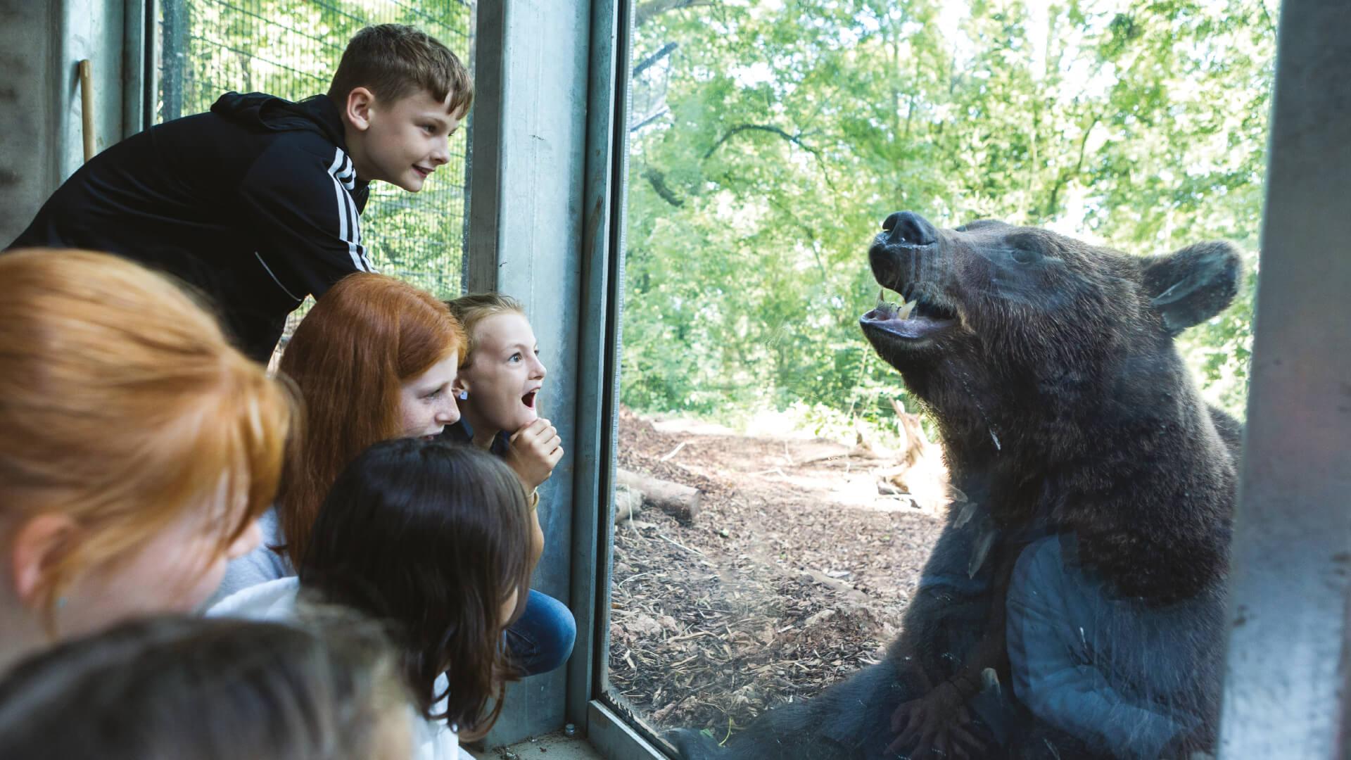 Children looking at bear in bear den at Bear Wood