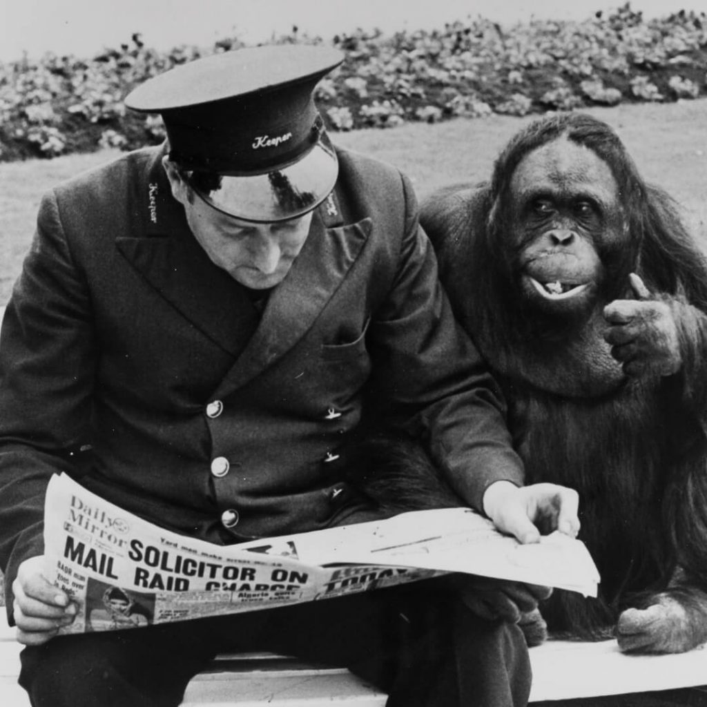 Archive photograph of keeper and orangutan on a bench at Bristol Zoo Gardens