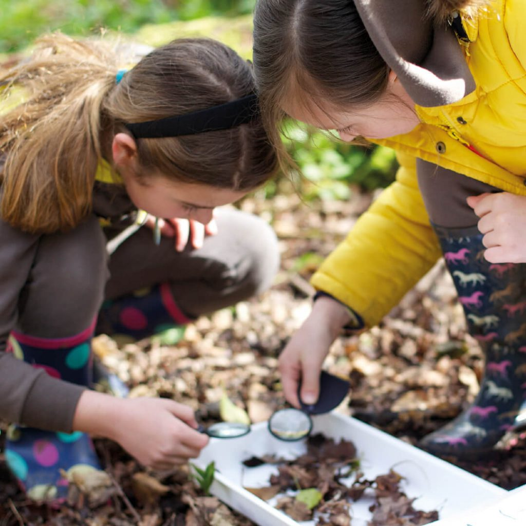 Children checking minibeasts at Wild Place Project