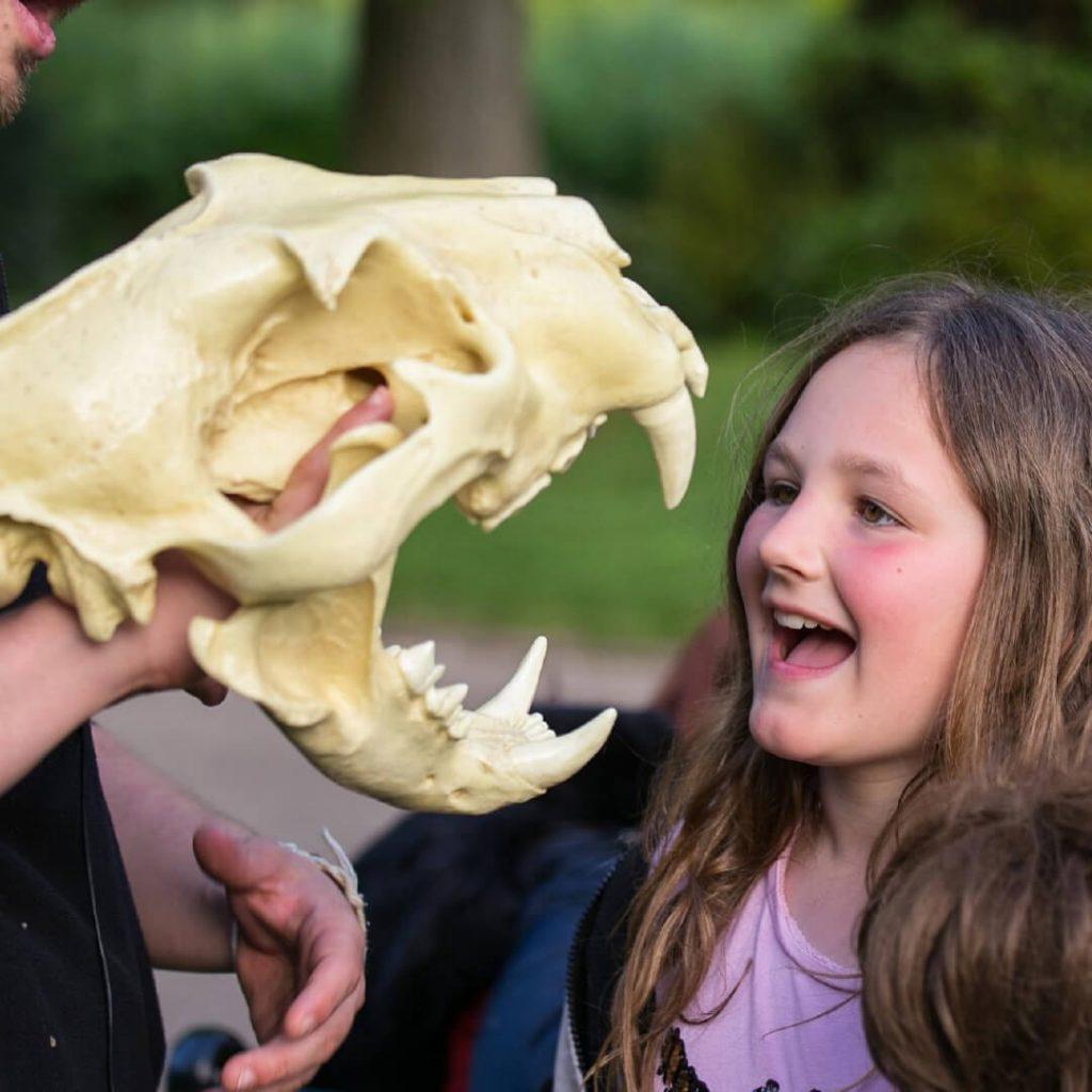 Ranger explaining animal skull anatomy to a child